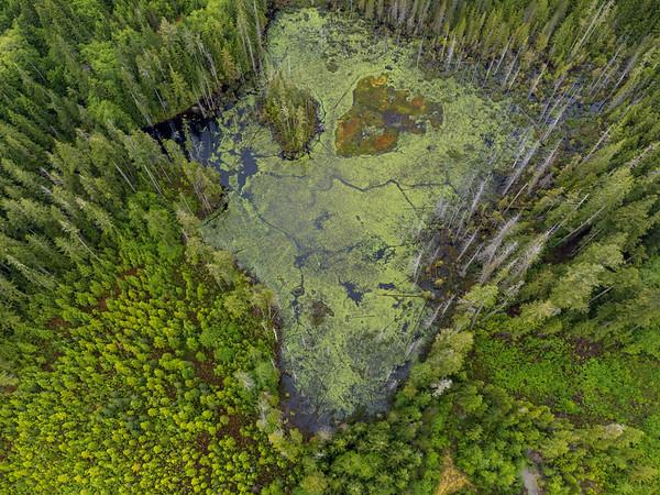 Swamp Colours