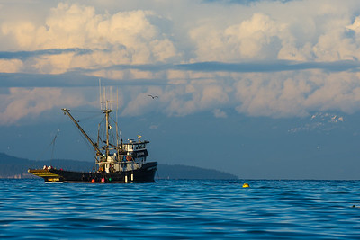 Herring Boat off Vancouver Island