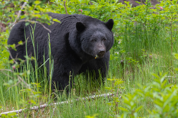 A new Bear.