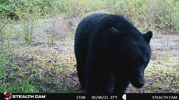 From my trail cam May 6, 2021