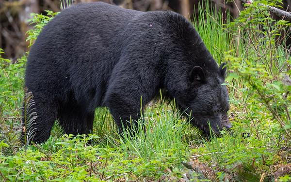 Full sized bear full frame.