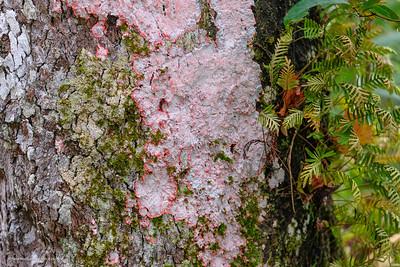 Moss, Everglades