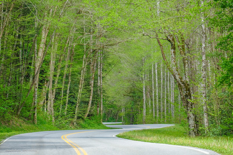 Forest road,  Great Smoky Mts NP