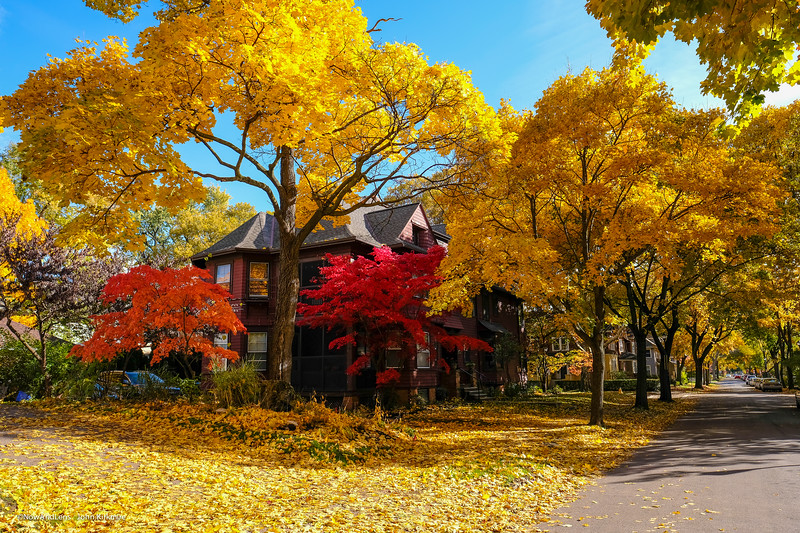 Autumn Leaves, Rochester