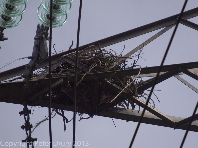 Raven's nest on the electricity pylon in the chalk quarry at Portsdown Hill