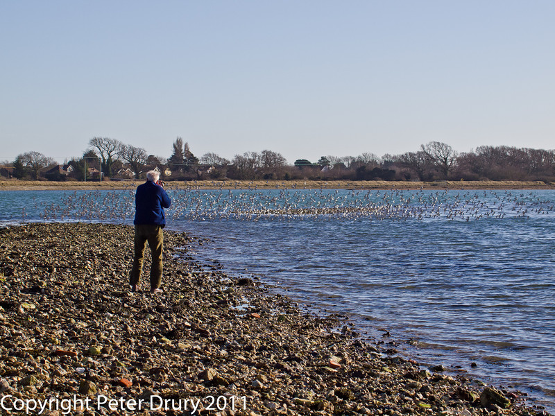 08 February 2011. David sneaking up to the Dunlin, Oystercatchers and Grey Plover roosting near the Oysterbeds. Copyright Peter Drury 2011