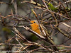 24 February 2011. Robin on the marsh. Copyright Peter Drury 2011