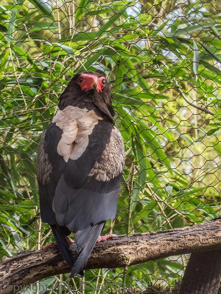 Female at Birdworld, Farnham