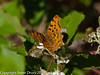 Comma. Copyright Peter Drury 2010