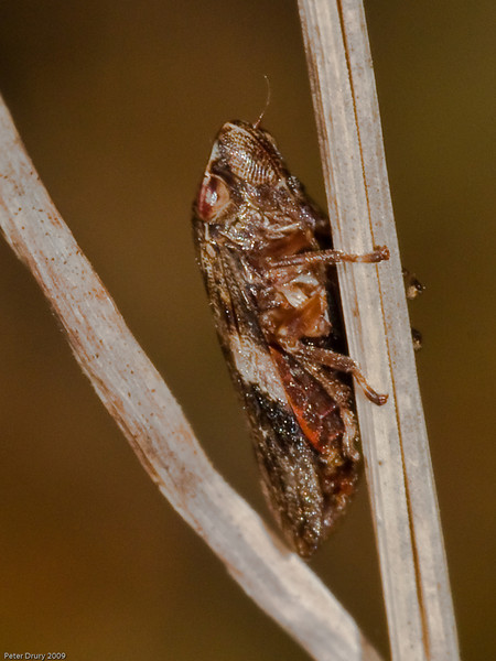 Hopper for ID. Copyright 2009 Peter Drury