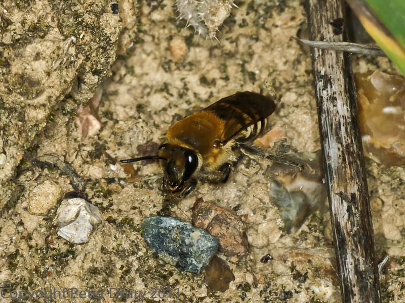 16 Sep 2011 Ivy Mining Bee.