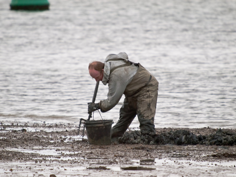 Bait Digger. Copyright Peter Drury 2010<br /> As the tide recedes, people wade onto the mud banks to dig for worms. There is a rich harvest to be had which is one of the reasons for the abundance of wildlife in Langstone Harbour.