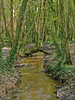 Kings Wood, Levalsa Meor<br /> This wood is on the B2273 (Valley Road, St Austell - Mevagissey) and well worth a visit.