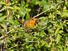 15 Oct 2011 Robin at the Oysterbeds.