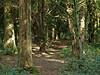 Sun dappled forest trail. Creech Woods. Copyright 2009 Peter Drury
