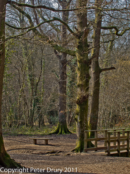08 March 2011. The meeting place. Copyright Peter Drury 2011<br /> Most paths into the woods converge here. It is a popular meeting place for dog walkers and other visitors. The bridge crosses a stream . It also marks the approximate centre of the woodland.