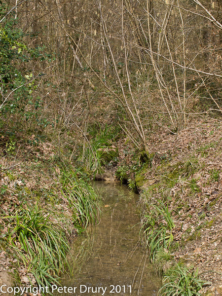 16 March 2011. Forest Trail.  Copyright Peter Drury 2011<br /> The stream at the meeting point looking north from the bridge.