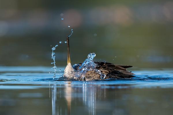 Bathing beauty.