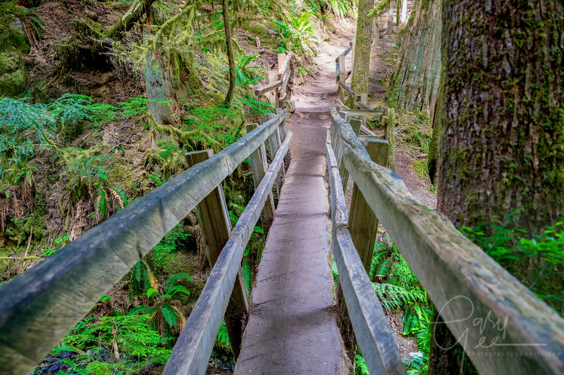 Half Log Bridge on the Trail to Marymere Falls  - Olympic National Park
