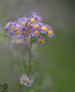 Small purple & yellow flowers