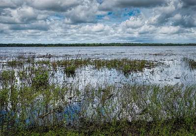 Flooded wetlands