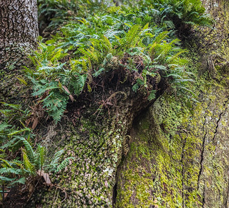 Ferns on fallen tree