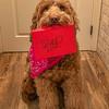 Zoey's Valentine Card