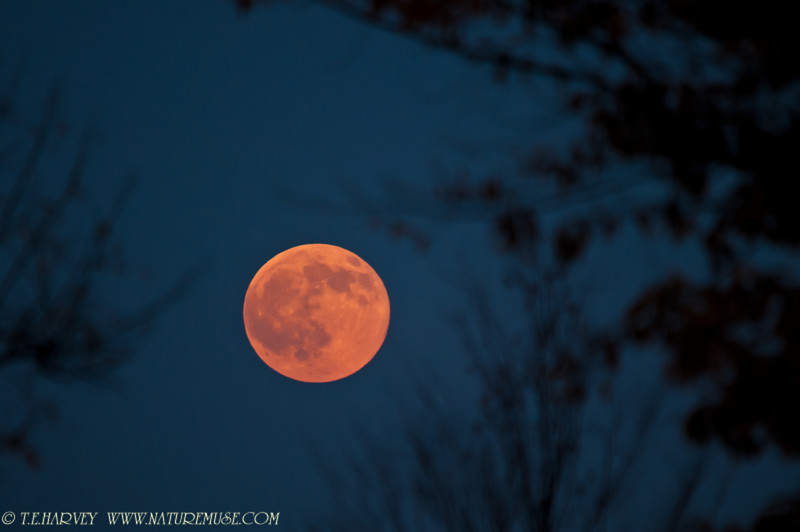 Full moon, November 2010