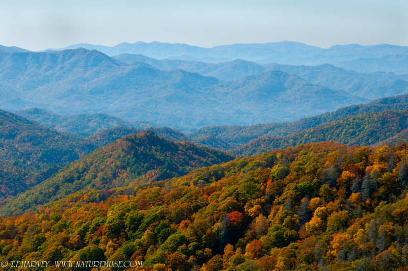 View from Newfound Gap in the Smokies.