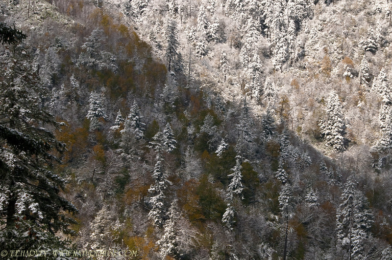 Autumn Colors and Snow in The Smokies on route 441 crossing into Tennessee from Newfound Gap, elevation over 5000 feet.
