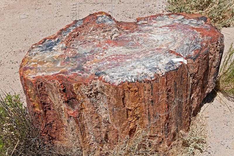 Petrified Wood,<br /> Petrified Forest National Park