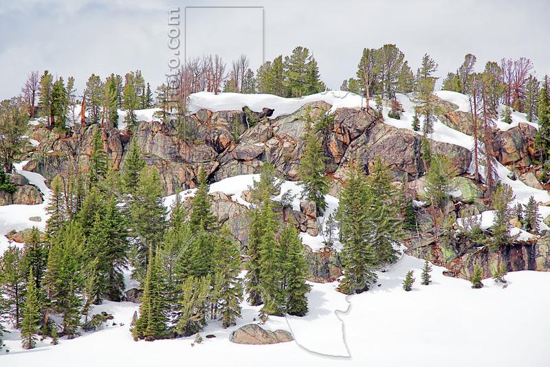 Beartooth Pass Spring Scenery, <br /> Near Yellowstone National Park, Wyoming<br /> Wyoming, USA
