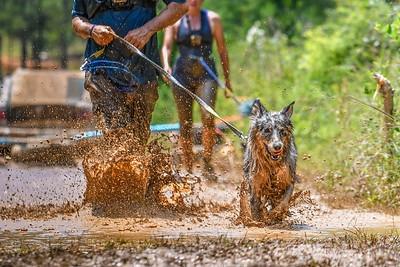 Canine Biathlon