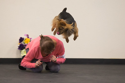 Canine Freestyle Trial