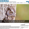 My photo in the may/june publication of Sierra Club magazine. https://www.sierraclub.org/sierra/2018-3-may-june/can-you-spot-owl-photograph