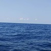 Video of a Sailfish I caught off of Stuart Florida. Fast forward to 1:40 seconds to see what Sails are known for.