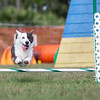 Gideon at Pawsitive Action Agility trail