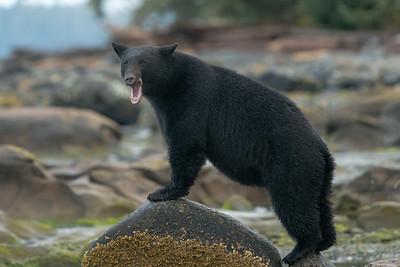 A big yawn.