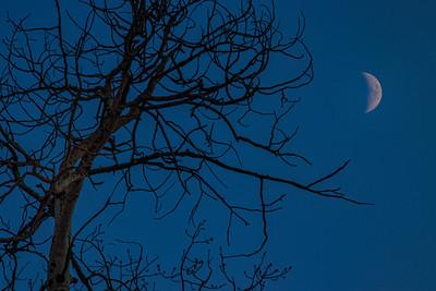 Waxing Crescent Moon Ghost Tree 2 Beaver Creek Colorado 11-2-19
