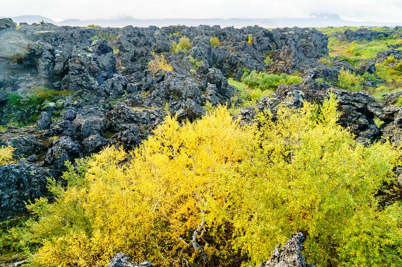 Fall colors in Dimmuborgir, a basalt wonderland in Iceland.