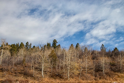 Winter Aspens 11-4-19 Beaver Creek CO