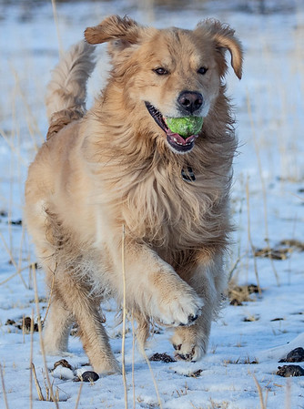 Harrison out retrieving tennis balls
