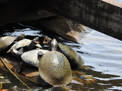 Turtles Not Getting Along