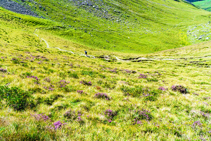 Wildflowers on the descent towards Elm from Foo Pass, Switzerland.