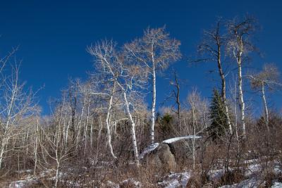 Winter Aspens Blue Sky Snow 11-2-19 Beaver Creek Colorado