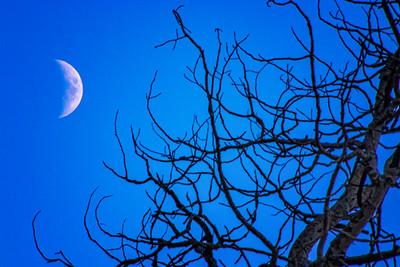 Waxing Crescent Moon Ghost Tree Beaver Creek Colorado 11-2-19