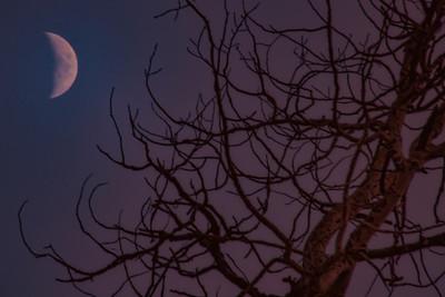 Waxing Crescent Moon Sunset Ghost Tree Beaver Creek Colorado 11-2-19