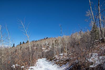 Winter Aspens 5 Blue Sky Snow 11-2-19 Beaver Creek Colorado