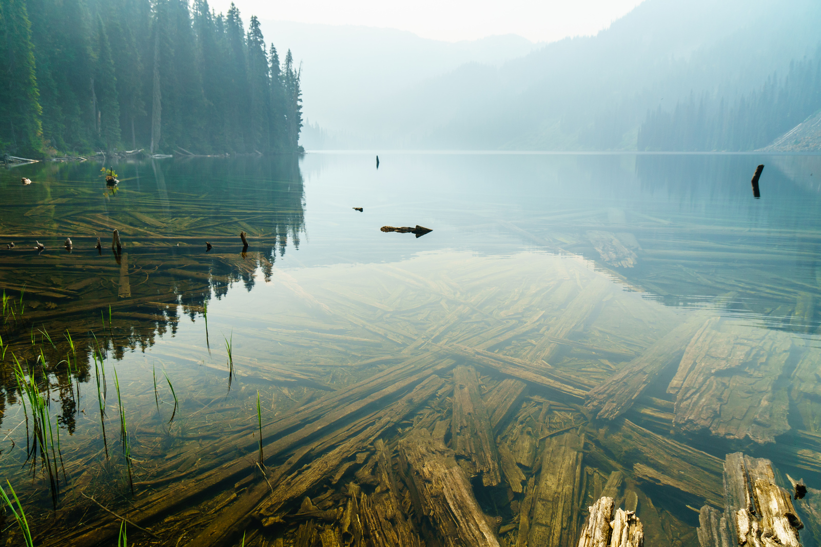 Smoky skies and long forgotten logs reflected in Lizzie Lake near Pemberton, British Columbia.
