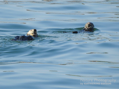 Happy Otters